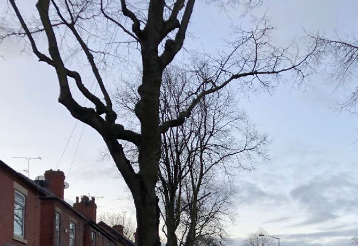 Removal of selected branches and limbs from the lower part of the trees crown, which raises the clearance above ground level.