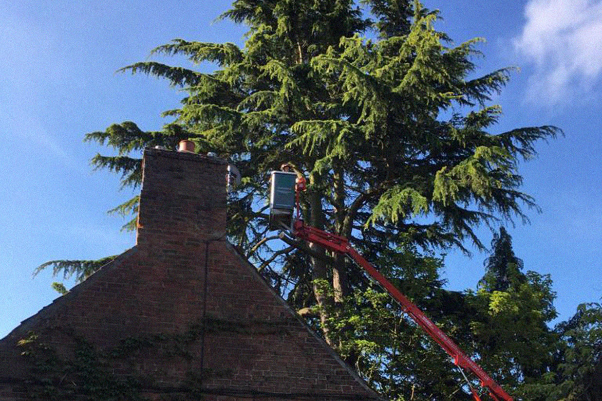 tree reduction quince cottage oxton